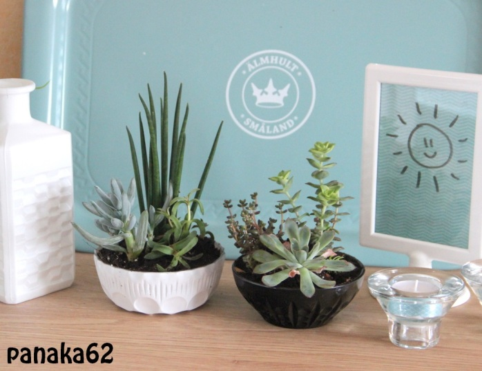 succulent - panaka62 (3)